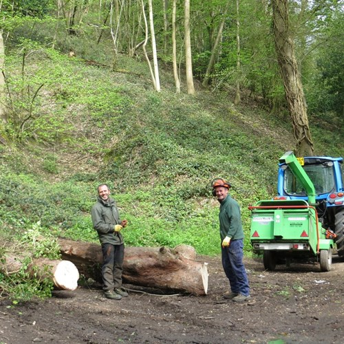 Tree felling field staff Foley Terrace low res.jpg