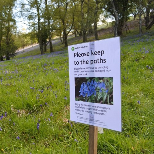 Bluebell sign low res.jpg
